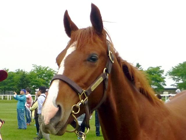 2013年社台募集馬ツアーを終えて_a0036685_23455573.jpg