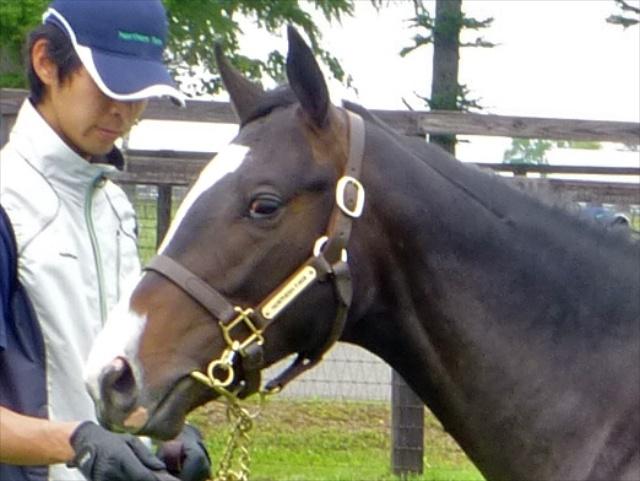 2013年社台募集馬ツアーを終えて_a0036685_23541358.jpg