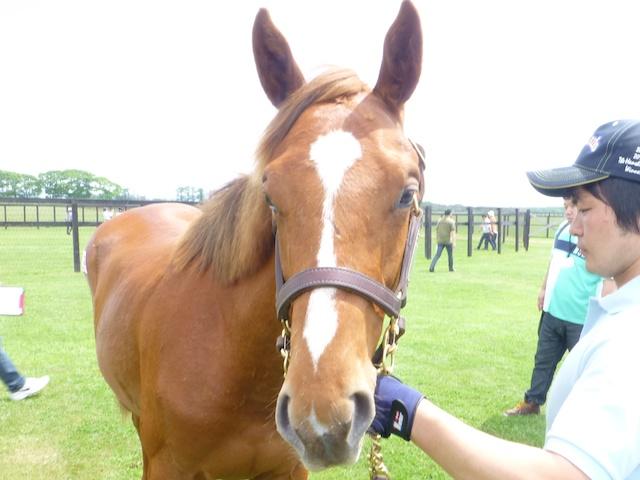 2013年社台募集馬ツアーを終えて_a0036685_2359864.jpg