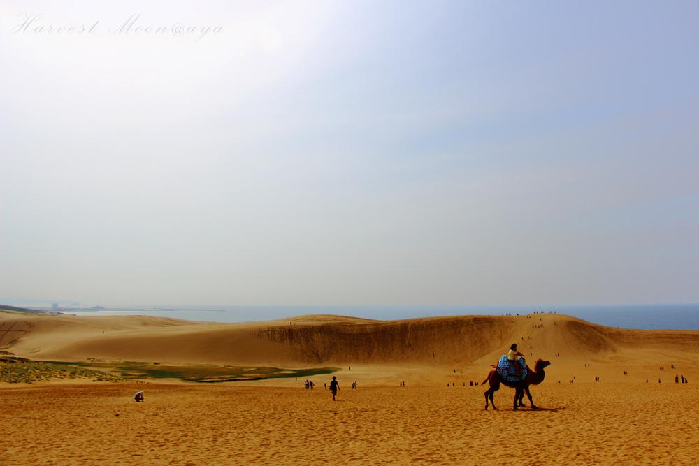Desert_b0208495_2223816.jpg