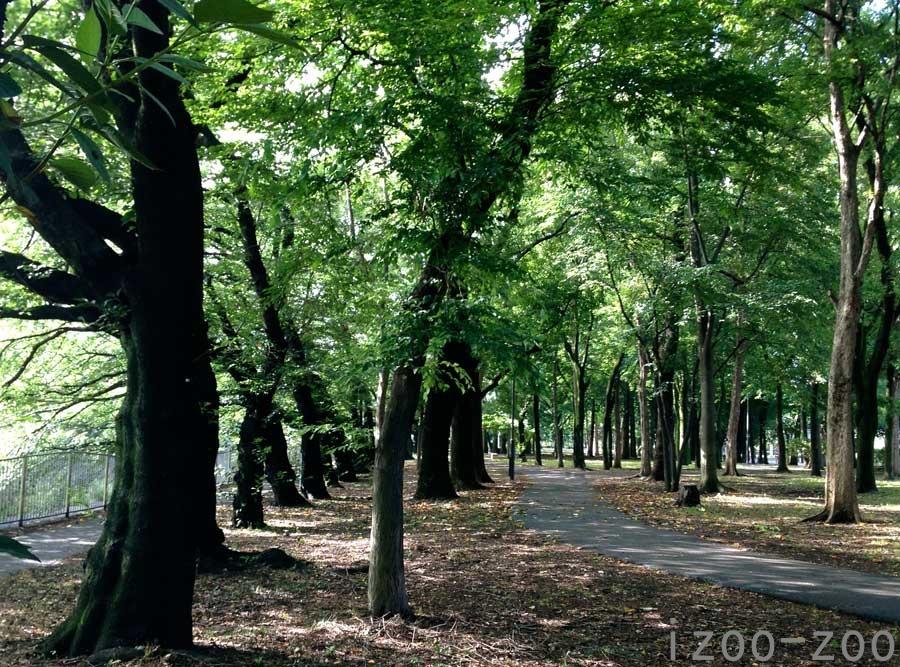 散歩たまには走るコース_c0223095_1119987.jpg