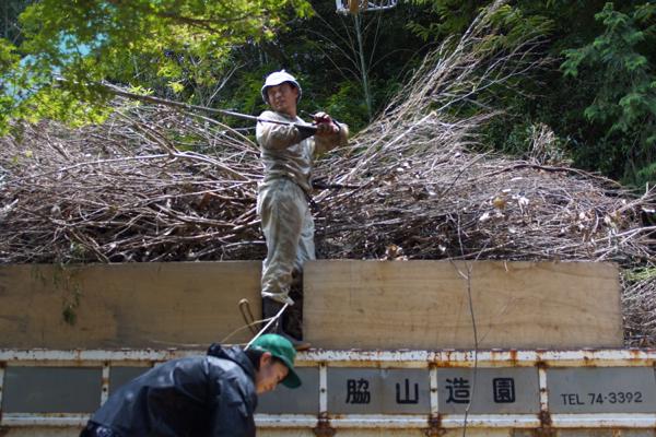 第二回 庭の伐採_f0120395_6455992.jpg