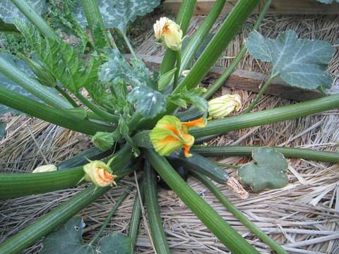 雨乞い家庭菜園_e0115904_10105343.jpg