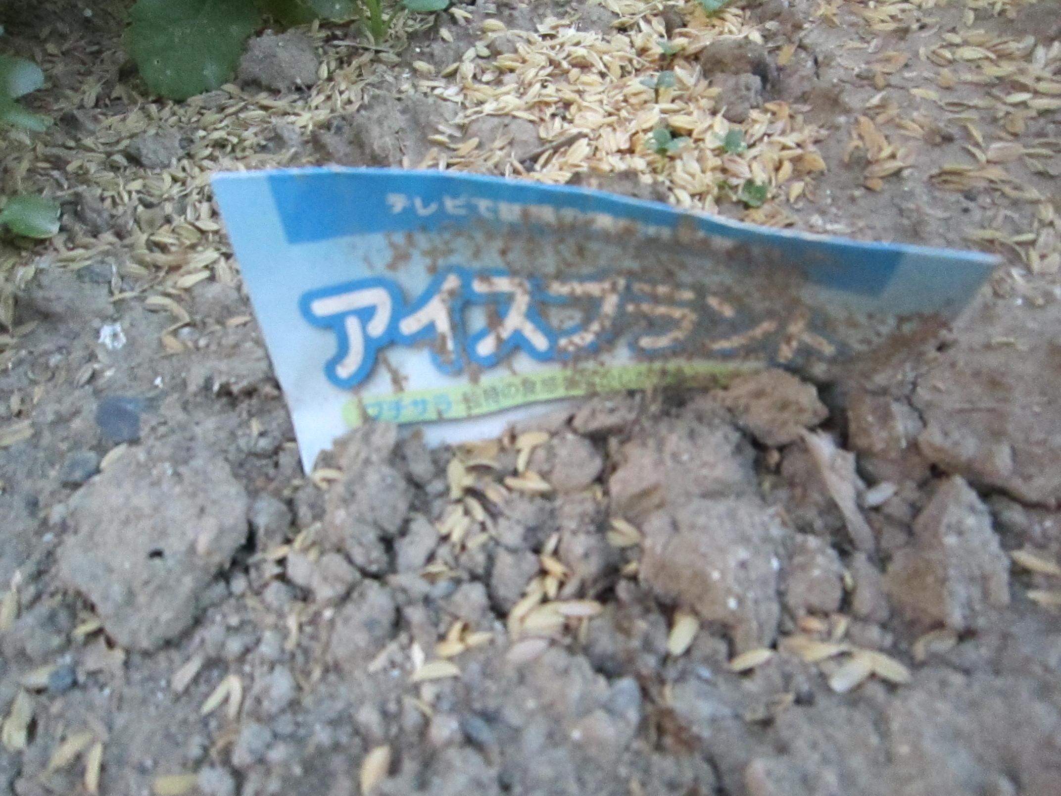 雨乞い家庭菜園_e0115904_1021480.jpg