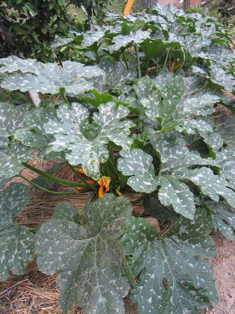 雨乞い家庭菜園_e0115904_109719.jpg