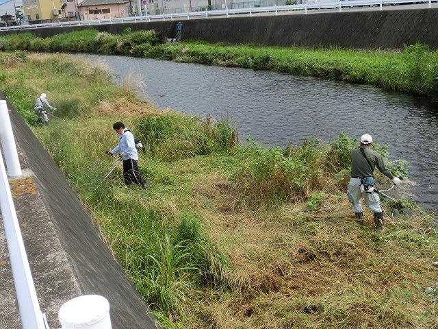 雨上がりの湿気の中「小潤井川 友の会」で草刈り_f0141310_7364251.jpg