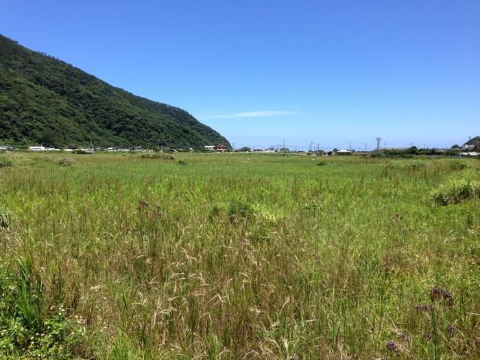 奄美大島~2013.06_b0148352_83981.jpg