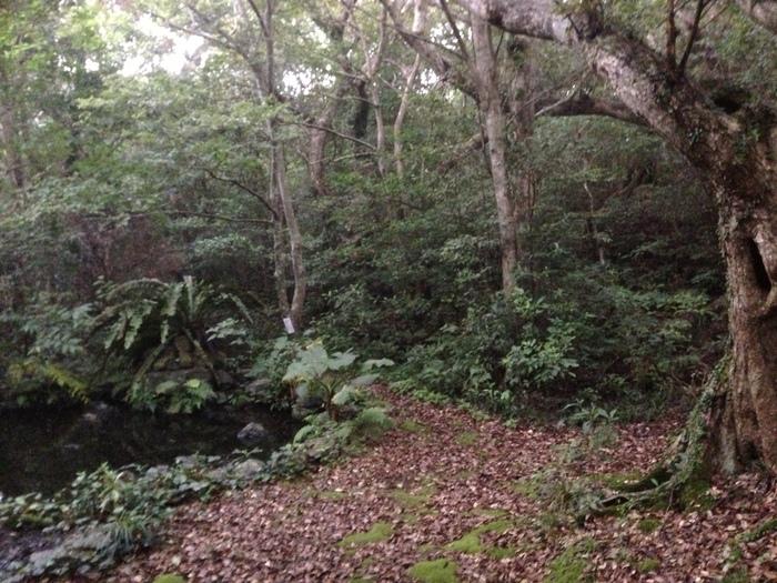 奄美大島~2013.06_b0148352_903979.jpg