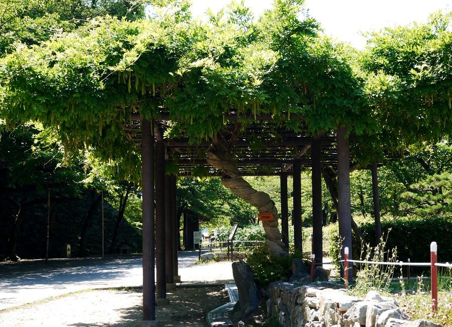 和歌山城公園にて_b0093754_22462100.jpg