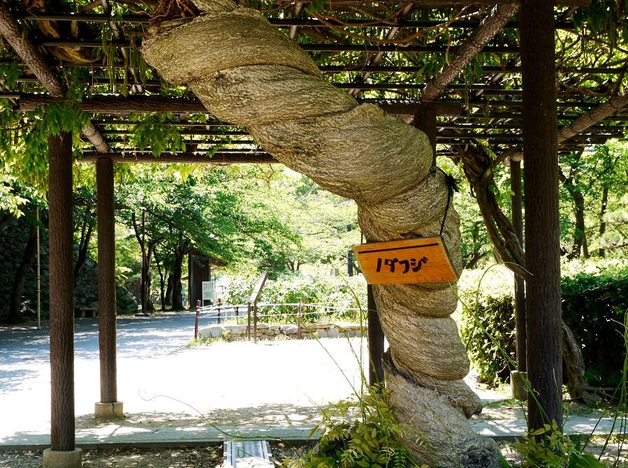 和歌山城公園にて_b0093754_22471494.jpg