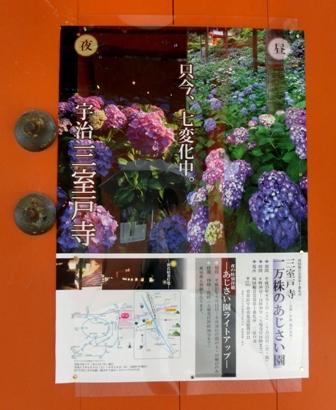三室戸寺の紫陽花_f0178060_18491542.jpg