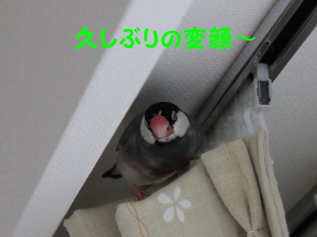 b0158061_21251599.jpg