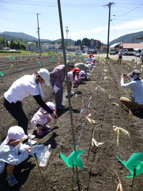 幼稚園、保育園の園児が種まきをしてくれました!_c0238069_11564751.jpg