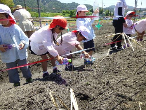 幼稚園、保育園の園児が種まきをしてくれました!_c0238069_11574100.jpg