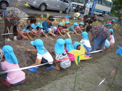幼稚園、保育園の園児が種まきをしてくれました!_c0238069_11582324.jpg