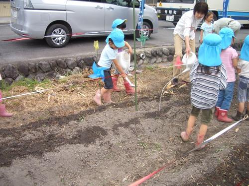幼稚園、保育園の園児が種まきをしてくれました!_c0238069_11585528.jpg