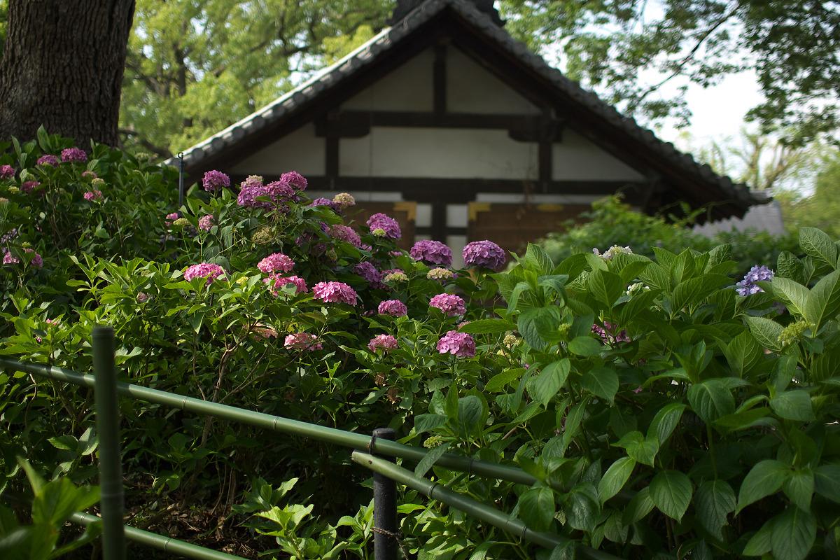 紫陽花 2013 <藤森神社> _f0021869_23282680.jpg