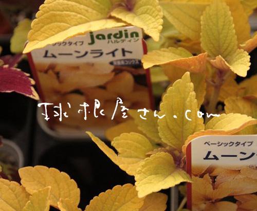 f0054197_517361.jpg