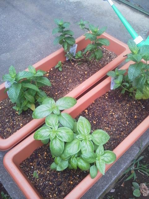 園芸始めました。_d0039912_153613100.jpg