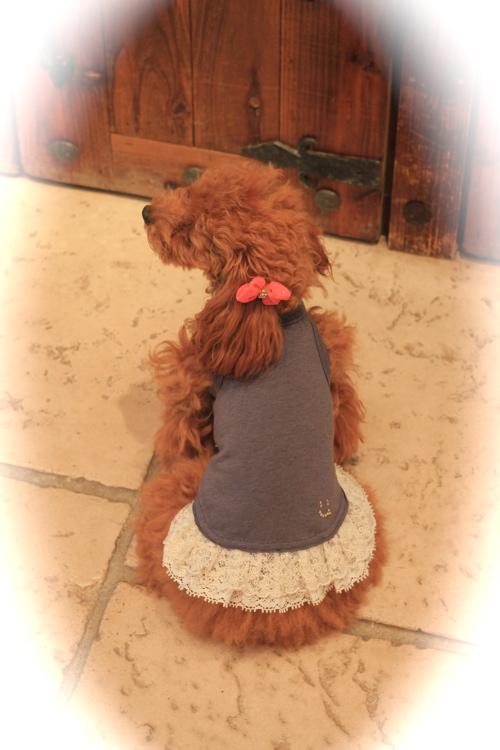 louis dog♡新作_d0060413_1421413.jpg