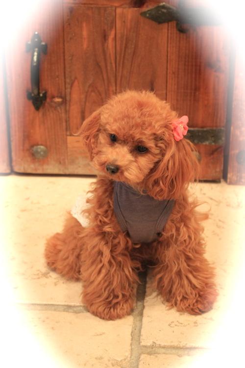 louis dog♡新作_d0060413_14214318.jpg