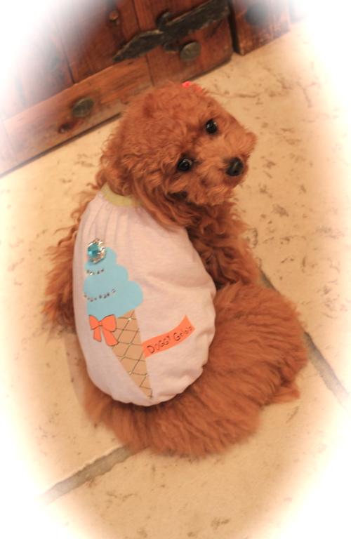 louis dog♡新作_d0060413_14215126.jpg