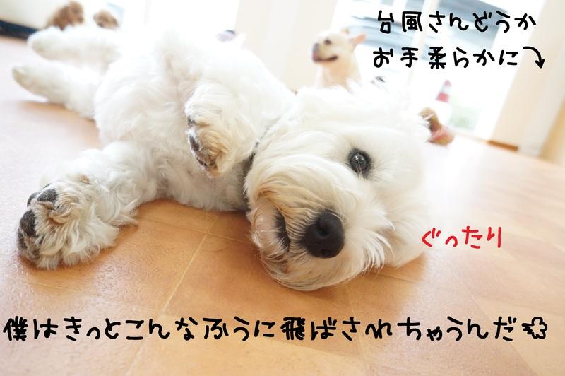 d0220513_17263598.jpg