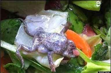 『ケンタッキーフライドチキン(KFC)は脳を油で揚げました?』/ Dailymail_b0003330_14205978.jpg