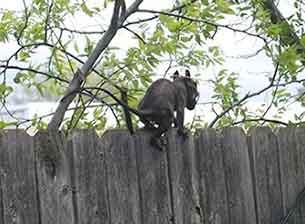 『オクラホマ州で撮影された謎の生物』画像 /  野生生物保護局_b0003330_225220100.jpg