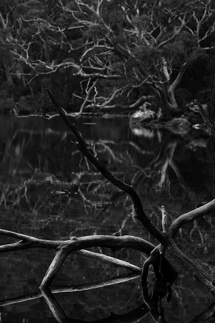 マウントフィールド 国立公園 撮影の宝のはこ_f0050534_925317.jpg