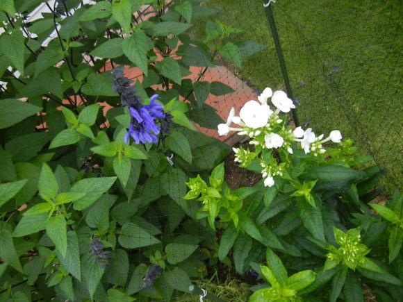 '13,6,19(水)強風と白い花!_f0060461_10223989.jpg