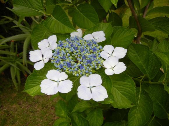 '13,6,19(水)強風と白い花!_f0060461_10241145.jpg