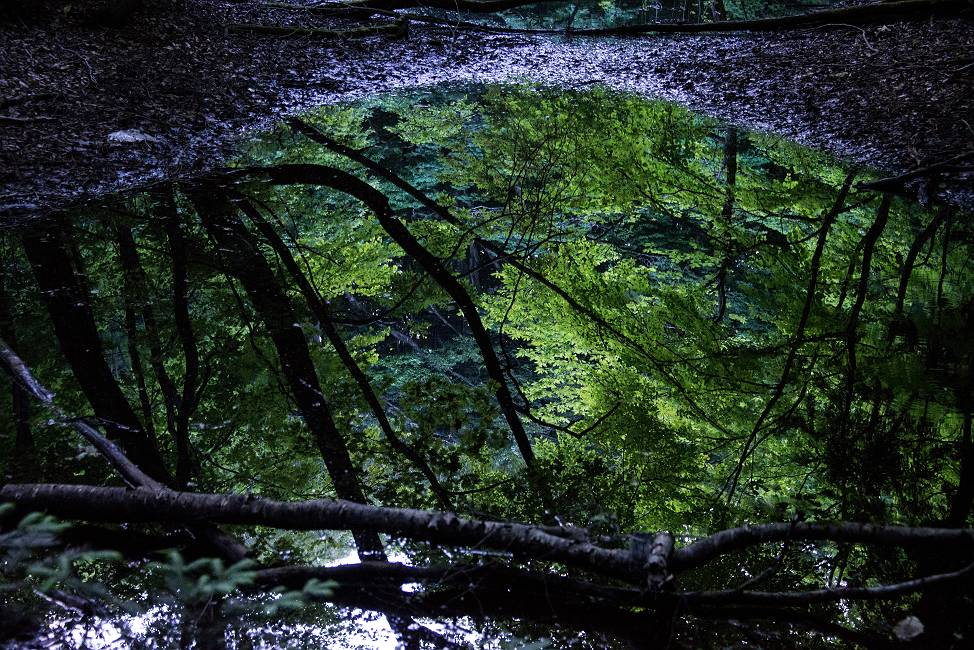 仲道の池の素顔_e0271864_19435879.jpg