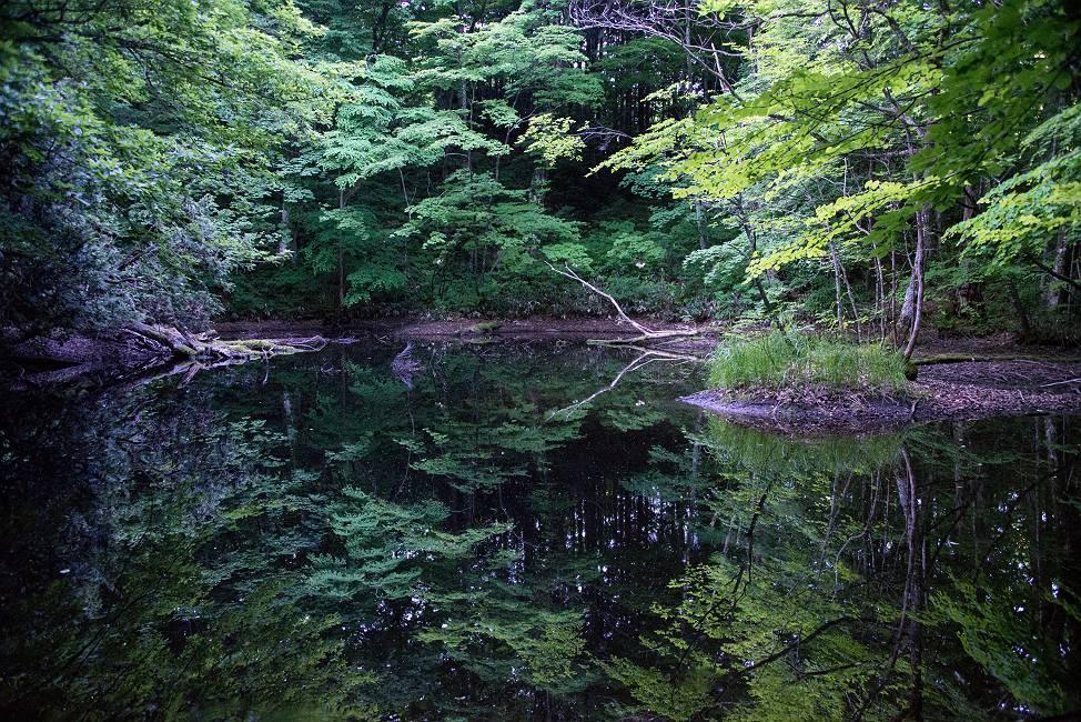 仲道の池の素顔_e0271864_19442293.jpg
