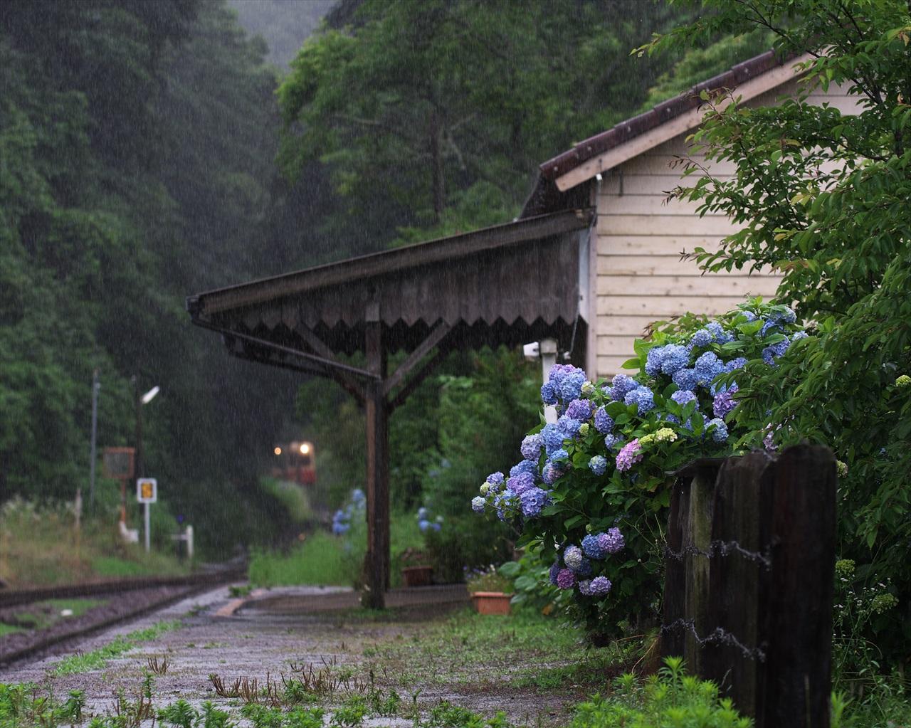 紫陽花の待つ駅_f0018464_21125838.jpg