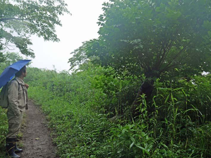南面に山桜、西北にモミジ植樹へ:第4回六国見山現地協議_c0014967_11103144.jpg