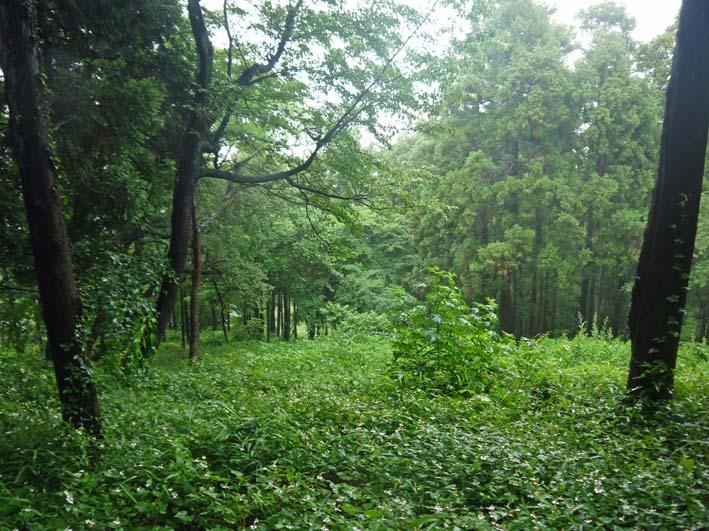 南面に山桜、西北にモミジ植樹へ:第4回六国見山現地協議_c0014967_1110425.jpg