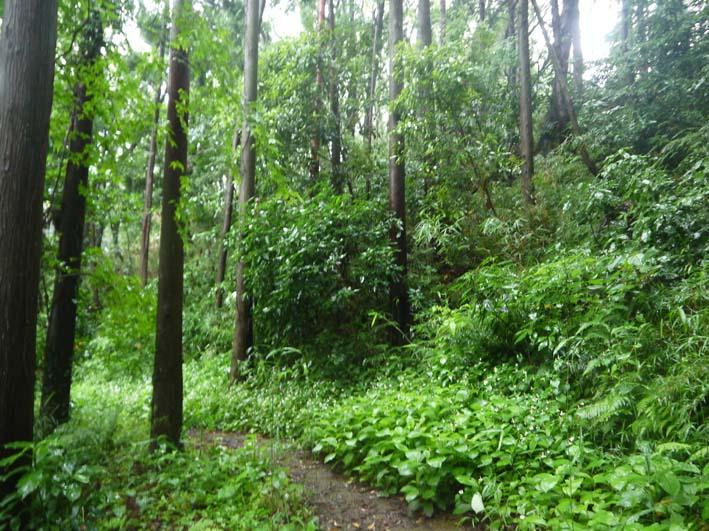 南面に山桜、西北にモミジ植樹へ:第4回六国見山現地協議_c0014967_11111649.jpg