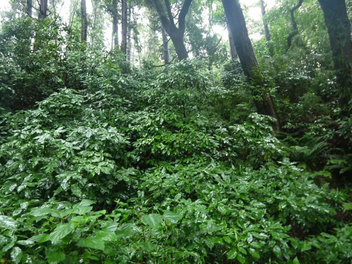 南面に山桜、西北にモミジ植樹へ:第4回六国見山現地協議_c0014967_1111510.jpg