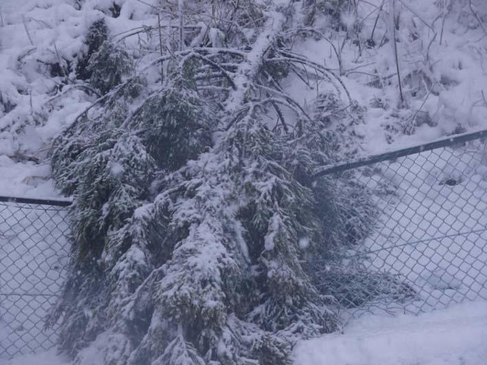 南面に山桜、西北にモミジ植樹へ:第4回六国見山現地協議_c0014967_1174743.jpg