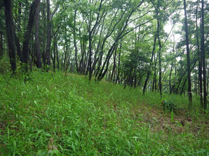 南面に山桜、西北にモミジ植樹へ:第4回六国見山現地協議_c0014967_1194718.jpg