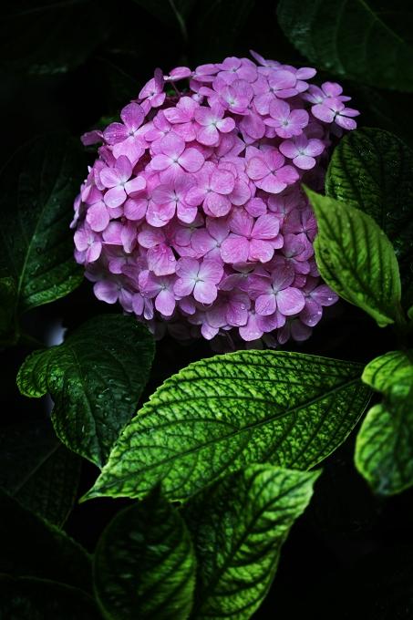 f0115475_20103232.jpg