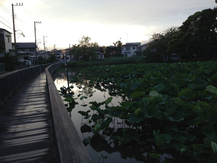 散歩嫌い_d0266681_23435967.jpg