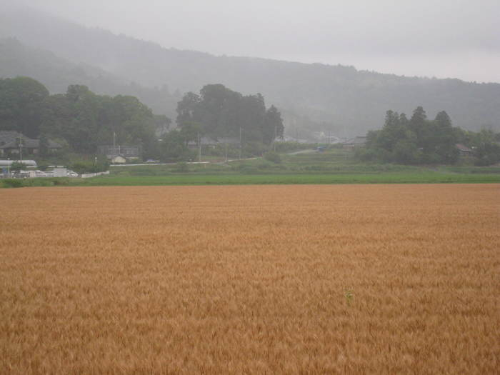 梅雨空の下_e0303187_15323272.jpg