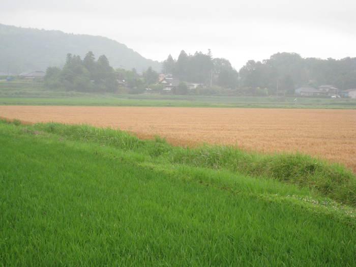 梅雨空の下_e0303187_15335881.jpg