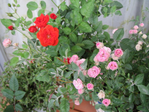 d0132214_20113612.jpg