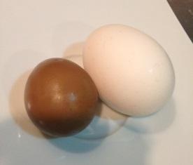キジの卵_e0025817_2237424.jpg