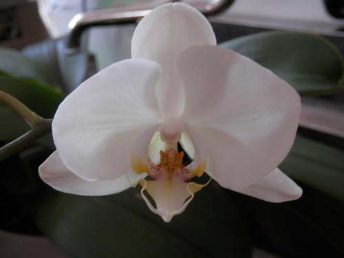 「蘭」咲きました。_a0125419_19213024.jpg