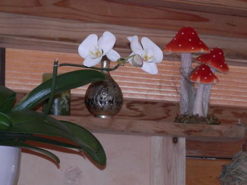 「蘭」咲きました。_a0125419_19224951.jpg