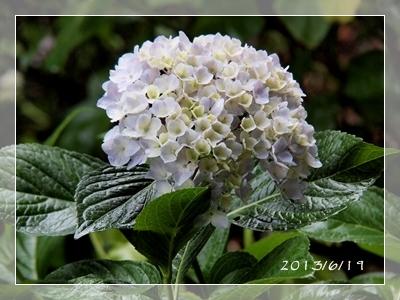 紫陽花には雨がよく似合ふ_c0026824_9381853.jpg